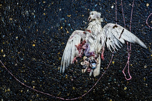 The Pigeon II (2013)